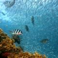 Koncentracija mikroplastike u okeanu veća nego ikada