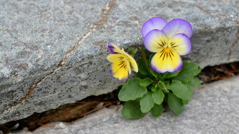 Dan planete Zemlje – u duhu optimizma i ekološke pismenosti